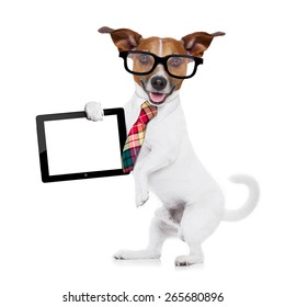 41510534e4ec jack russell dog office worker with tie