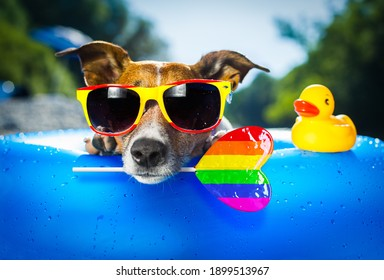 jack russell dog on  blue air mattress in gay pride in summer vacation at the beach or river   in water refreshing rainbow candy stick or lollipop