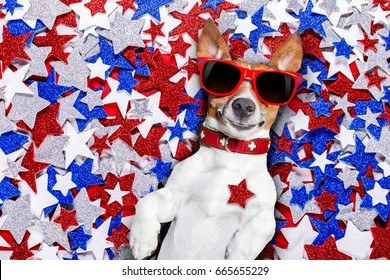jack russell dog on independence day 4th of july on a background of usa Stars , wearing funny sunglasses