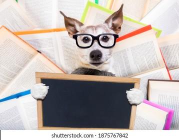 Hund aus dem Segeltuch, der ein Buch mit Nervenbrille liest, schlau und intelligent aussieht, auf Büchern liegt