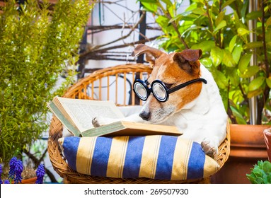 jack russell dog reading his favorite book,surrounded by green plants , relaxing and sitting on a lounger or deck chair outside