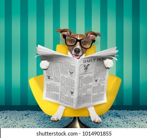 jack russell dog reading newspaper on a chair or  sofa , couch, or lounger , in living room