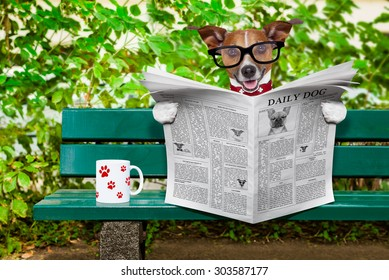jack russell  dog reading a newspaper or magazine sitting on a bank at the park, relaxing and having a cup of tea or coffee