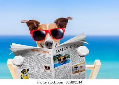 jack russell dog , reading newspaper or magazine in hammock at the beach on summer vacation holidays