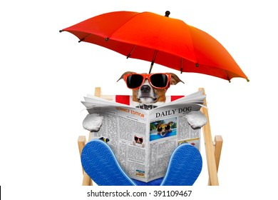jack russell dog reading newspaper on a beach chair   with sunglasses under umbrella , isolated on white background