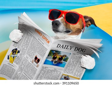 jack russell dog reading a newspaper  or magazine, at the beach on summer vacation holidays