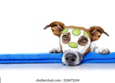 Imágenes, fotos de stock y vectores sobre Dog Mask