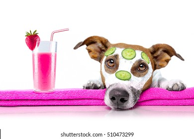 jack russell dog relaxing  with beauty mask in  spa wellness center , moisturizing cream mask and cucumber , isolated on white background, with cocktail smoothie milkshake