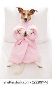 jack russell dog relaxing  with a prayer yoga pose with paws, in a spa wellness center, wearing a  bathrobe