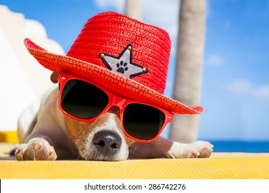 jack russell dog resting , sleeping a siesta under a palm tree, on summer vacation holidays at the beach , wearing sunglasses and a big hat sombrero