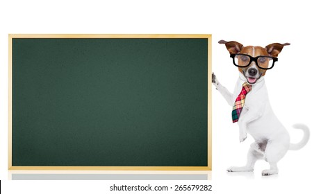 jack russell dog as school teacher holding a blackboard , isolated on white background