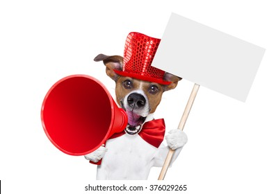 jack russell dog ,shouting  and advertising  sale discount  with retro megaphone or big microphone holding white blank placard or blackboard, isolated on white background