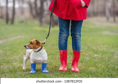 Jack russell dog sitting next to a girl with leash in jeans and red  rain boots in spring park. Healthy lifestyle, happy childhood concept.