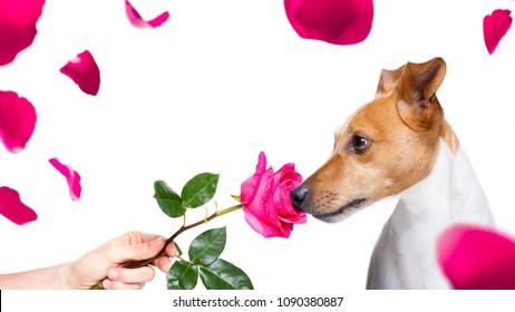Jack Rose Imágenes, fotos y vectores de stock | Shutterstock
