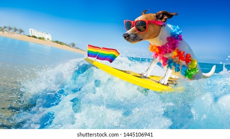 jack russell dog surfing on a wave , on ocean sea on summer vacation holidays, with cool sunglasses and flower chain and rainbow lgbt flag for gay pride