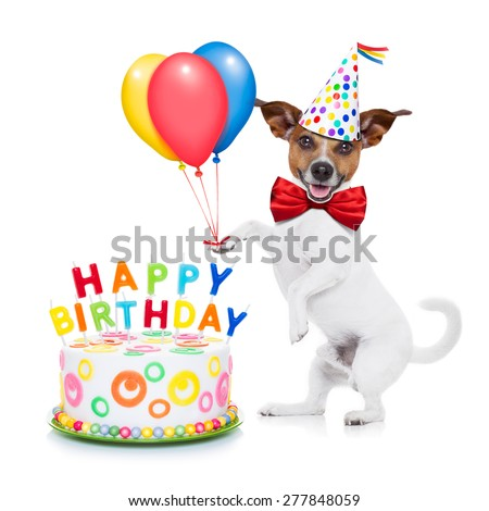 jack russell dog surprise happy birthday の写真素材 今すぐ編集