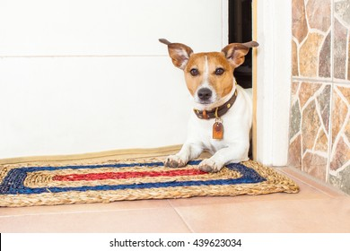 jack russell dog waiting for owner