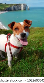 Jack Russell at Etretat in Normandy : Travel in France