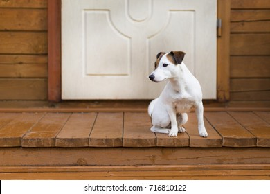 Jack Russell on the porch