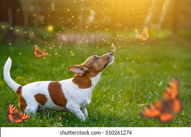 Jack russell puppy dog with butterfly on his nose. Funny moment.