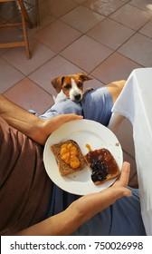 Jack Russell puppy want to share the breakfast