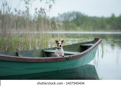 Jack Russell Terrier in a boat on the lake, a dog on the nature, travel