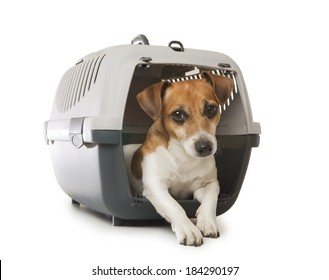 Jack Russell Terrier dog inside a special plastic gray crate animal. White background. Studio shot.