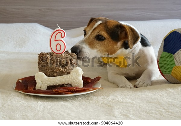 Incredible Jack Russell Terrier Dog Sniffing Cake Stock Photo Edit Now Funny Birthday Cards Online Fluifree Goldxyz