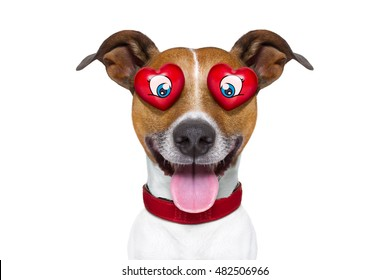 jack russell terrier emoticon or emoji dog funny silly and crazy in love with heart on eyes , sticking out the tongue, isolated on white background, for valentines day