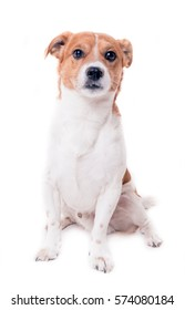Jack russell terrier pup sitting on white background