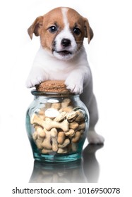 Jack Russell Terrier puppy and dog food, cookies in a bone form