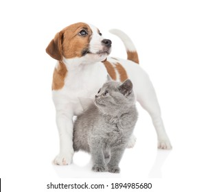 Jack russell terrier puppy hugs tiny scottish kitten. Pets look in different directions. isolated on white background
