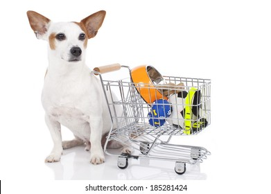 Jack Russell Terrier with shopping basket