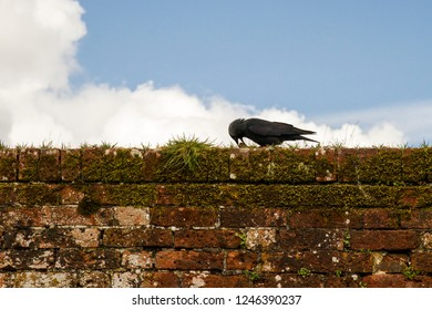 Jackdaw sitting on a wall against the sky