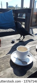 Jackdaw is steeling a cookie and drinking from coffee cream cup on beach club terrace in Noordwijk