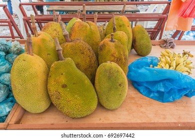 jackfruit or Artocarpus heterophyllus is a local tree in Southeast Asia and South. The color is yellowish when ripe. His skin was gummy, but the content was sweet and fatty.The contents are yellow