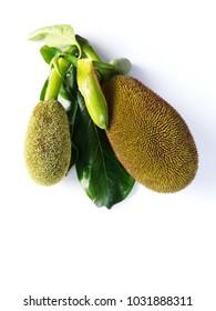 Jackfruit on a white background