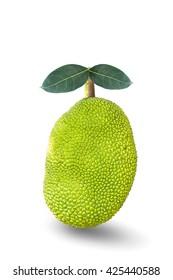 Jackfruit raw isolated on white background.
