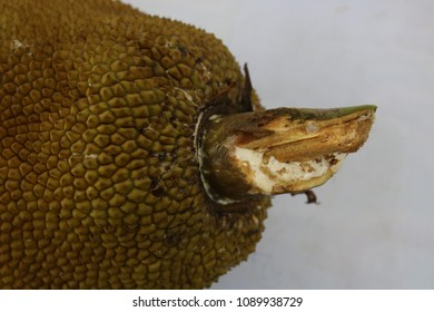 a jackfruit is a tropical fruits found in Asia.
