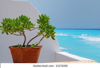 Jade plants and stucco wall with caribbean ocean in background