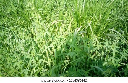 Planta Pedis Images, Stock Photos & Vectors   Shutterstock