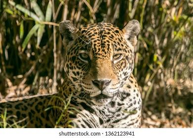 Jaguar keeping an eye out