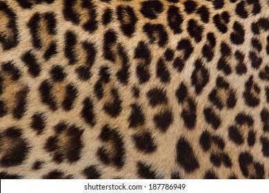 Jaguar, leopard and ocelot skin texture