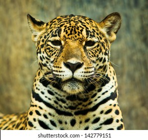 Jaguar and lived in Central America and South America
