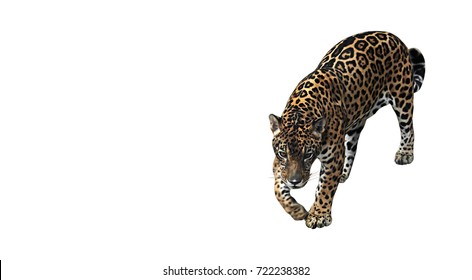 Jaguar Ready To Attack Isolated on White Background, Clipping Path