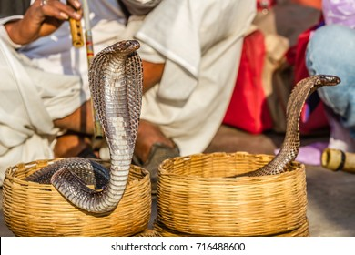 Jaipur, India, 19th January 2017 - Snake charmers  in the streets of Jaipur, India.