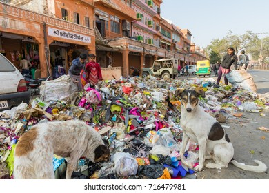 Jaipur, India, 9th January 2017 - Children and dogs rummage thru garbage in the street in Jaipur, India
