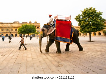 JAIPUR, INDIA - JAN 23: Big elephant walkibg through the historical square of indian Amber Fort on January 23, 2015 in Rajasthan. Amber Fort was built in 1592 by king Raja Man Singh.
