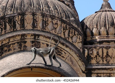 JAIPUR, INDIA - MARCH 08, 2006: A monkey walks across the rooftops of the Nahargarh fort on the outskirts of Jaipur