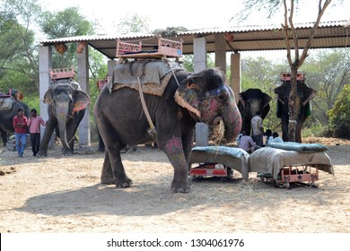 JAIPUR, INDIA - NOVEMBER 13, 2015: Painted elephant and rider at Dera Amer Elephant Safari. The camp is run by a local family out of their ancestral home.